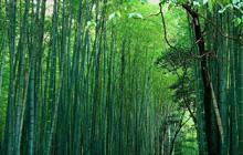 Wald von Anji
