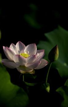 Chinesische Schmuckkästchen Lotus